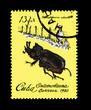 CUBA, Entomofauna Homophileurus cubanus,  circa 1980