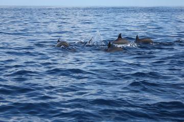 dauphins dans le grand bleu