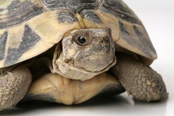 portrait of turtle