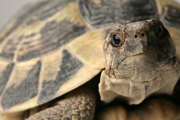tartaruga guarda in macchina