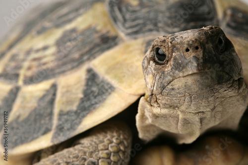 Foto op Plexiglas Schildpad tartaruga guarda in macchina