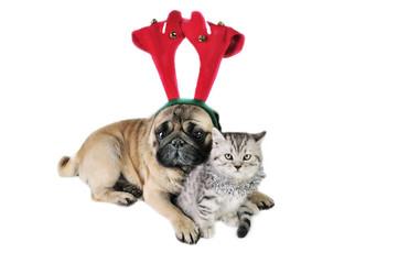 Christmas dog and kitten