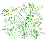 Pusteblume und Gräser