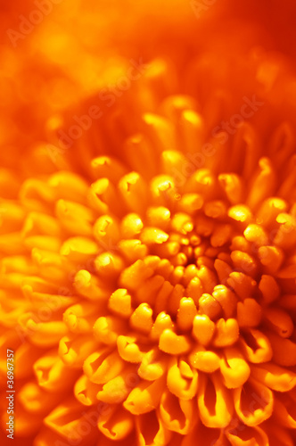 orange flower bud