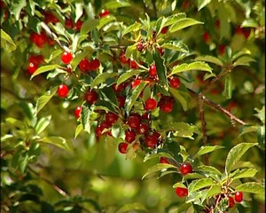 frutta colorata