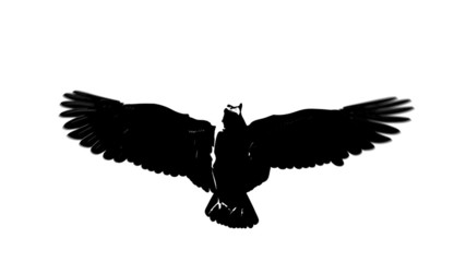 looping flying eagle in black isolated on white background