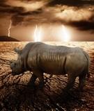 Fototapeta pustynia - nosorożec - Dziki Ssak