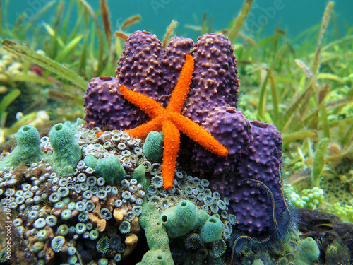 Sea star and sponges