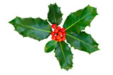 Holly leaves with red berries on a white background, isolated.
