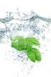 basilico splash