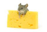 mouse and cheese - Fine Art prints