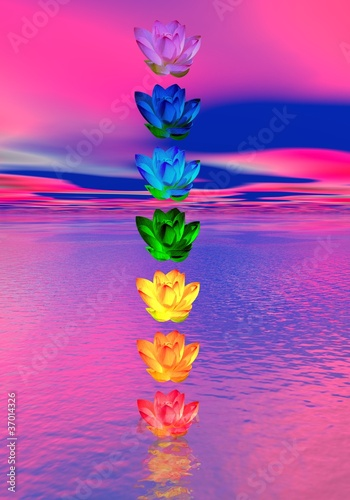 Chakra colors of lily flower