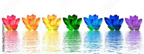 Lily flowers chakras