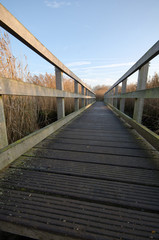 Walkway through the Reeds