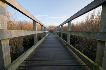 Bridge Through The Reeds 1