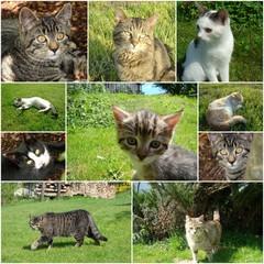 Collage von verschiedenen Katzenfotos