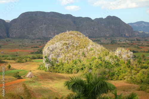 Cuba - karstic landscape in Vinales National Park
