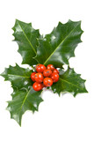 Real holly berries and leave