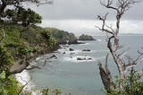 Whale Bay in New Zealand - 37035568