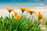Orange Flowers on the White sand Beach - 37035740