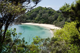 Whale Bay, New Zealand - 37035974