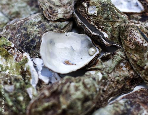 Leinwanddruck Bild perle d'huître