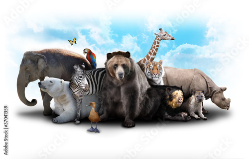 Foto op Canvas Tijger Zoo Animal Friends