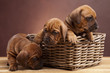 Young happy dogs in basket on wooden floor