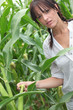 Agriculturist stood in corn field