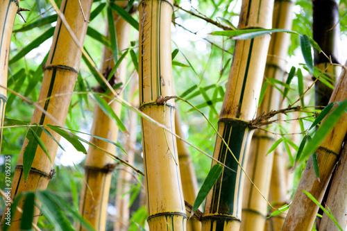 Fototapeten,asien,hintergrund,bambus,schönheit