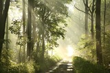 Fototapety Forest trail on a foggy spring morning after the rain
