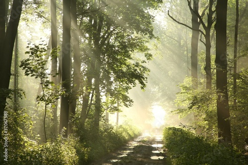Forest trail on a foggy spring morning after the rain © joda