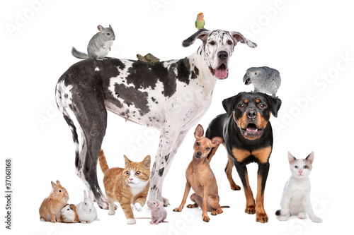 Foto op Canvas Papegaai Pets in front of a white background