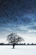 tree in field snowing