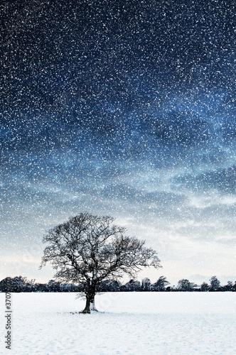tree in field snowing