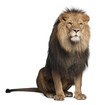 Lion, Panthera leo, 8 years old, sitting