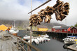 Nusfiord's harbour with  codfish heads
