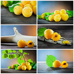plum fruit collage