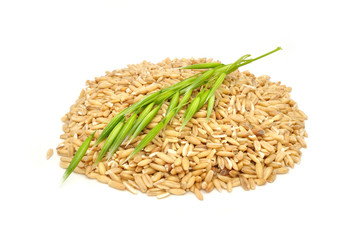Whole Oats and Green Ear Isolated on White Background