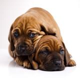 Fototapete Dogs - Baby - Haustiere