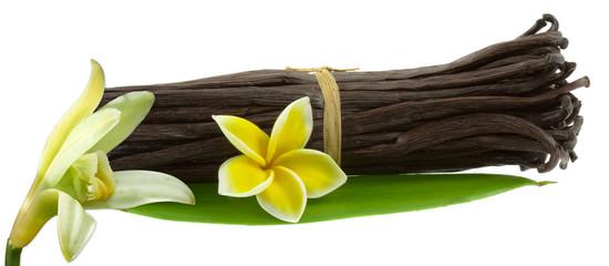 gousses et fleur de vanille