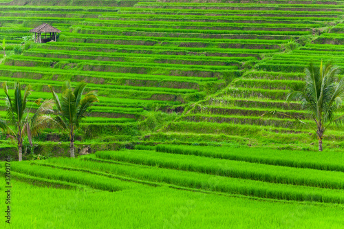Foto op Plexiglas Indonesië Flooded Paddy Field
