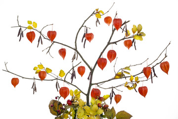 Red autumn hearts tree concept