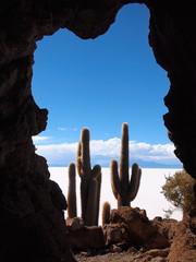 View on cactus and Uyuni salt lake