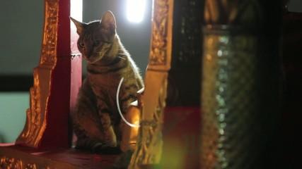 Cat sitting on a shrine
