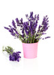 Bouquet lavender in pot