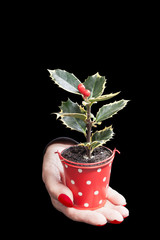 Planta de acebo en la mano