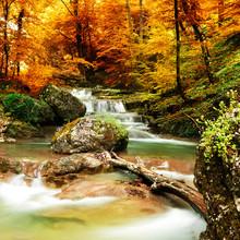 Осенний ручей леса с желтыми деревьями