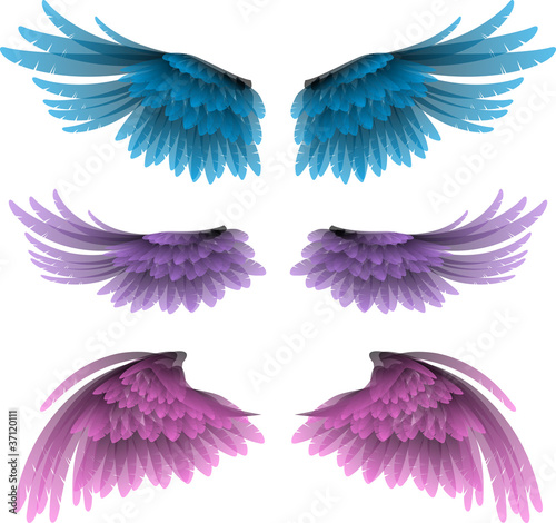 set of wings vector illustration