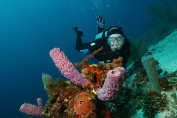 Scuba Diver and Purple Vase Sponges - Cozumel, Mexico
